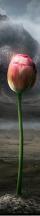DPG3-12b
